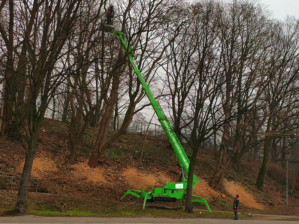 Baumfällung mit Hubwagen in Hamburg