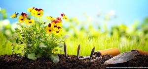 Gartenpflege aus Leidenschaft