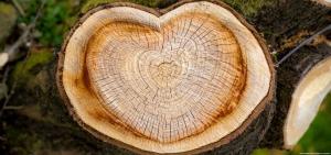Baumfällung mit Herz