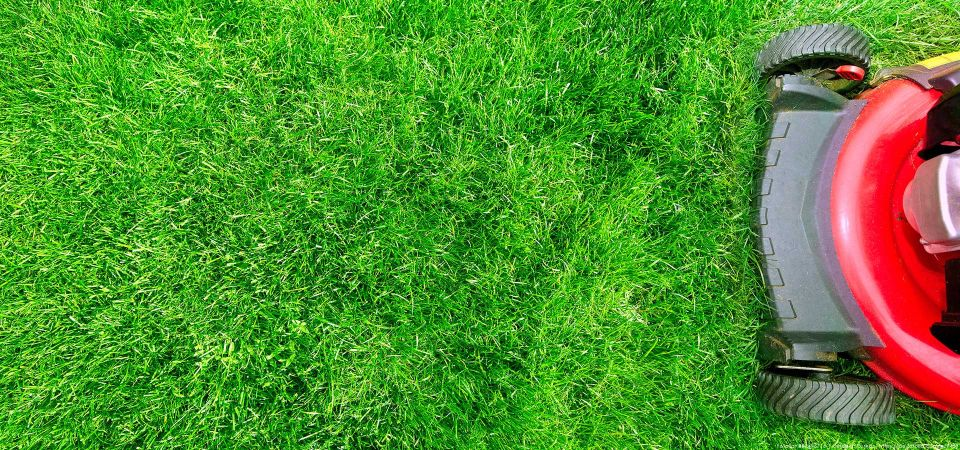 Rasenmähen mit Rasenmäher in Hamburg