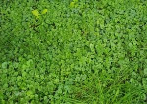 Grüne Vielfalt