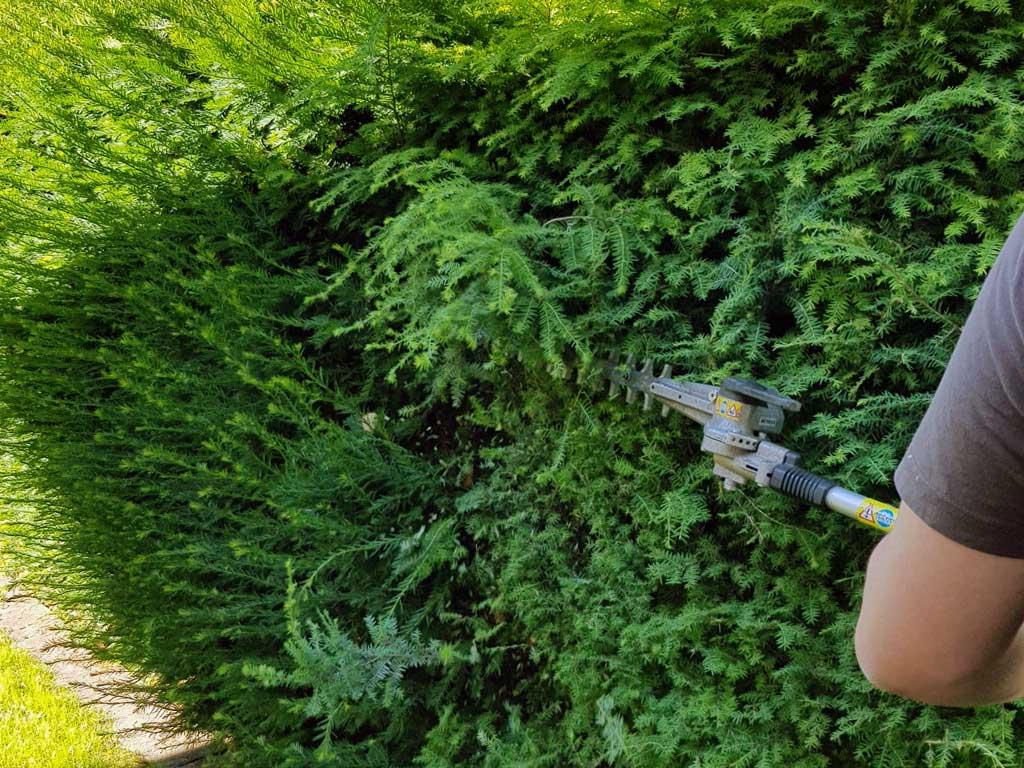 Schnitt einer Thuja Hecke mit Stihl Heckenschneider