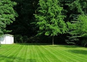 Top gepflegte Rasenfläche nach Rasenmähen in Hamburg