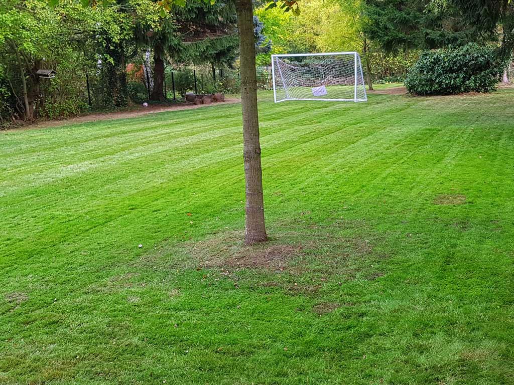 Sportliche Rasenpflege: Frisch gemähter Rasen mit Fußballtor