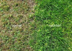 Vorher/Nachher-Ansicht eines Rasens vor und nach einer Vertikutierung und Raseneinsaat