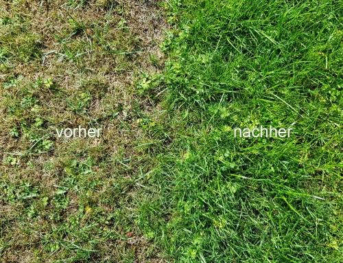 Vertikutierung und Raseneinsaat in der Vorher/Nachher-Ansicht