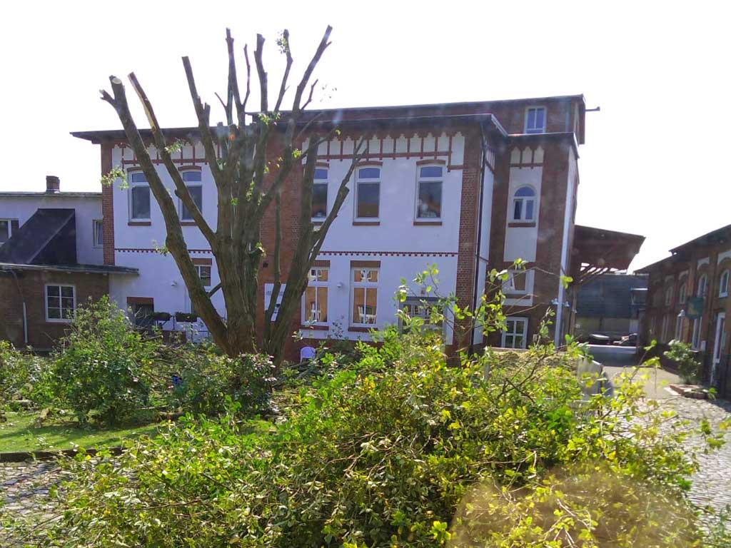 Baumschnitt und Baumfällung vom Fachmann in Hamburg, damit die Baumpflege ohne Zwischenfälle abläuft