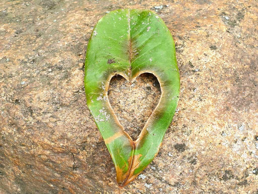 Blatt mit Herz - Das ist Gartenpflege von Haus und Garten mit Herz und Verstand