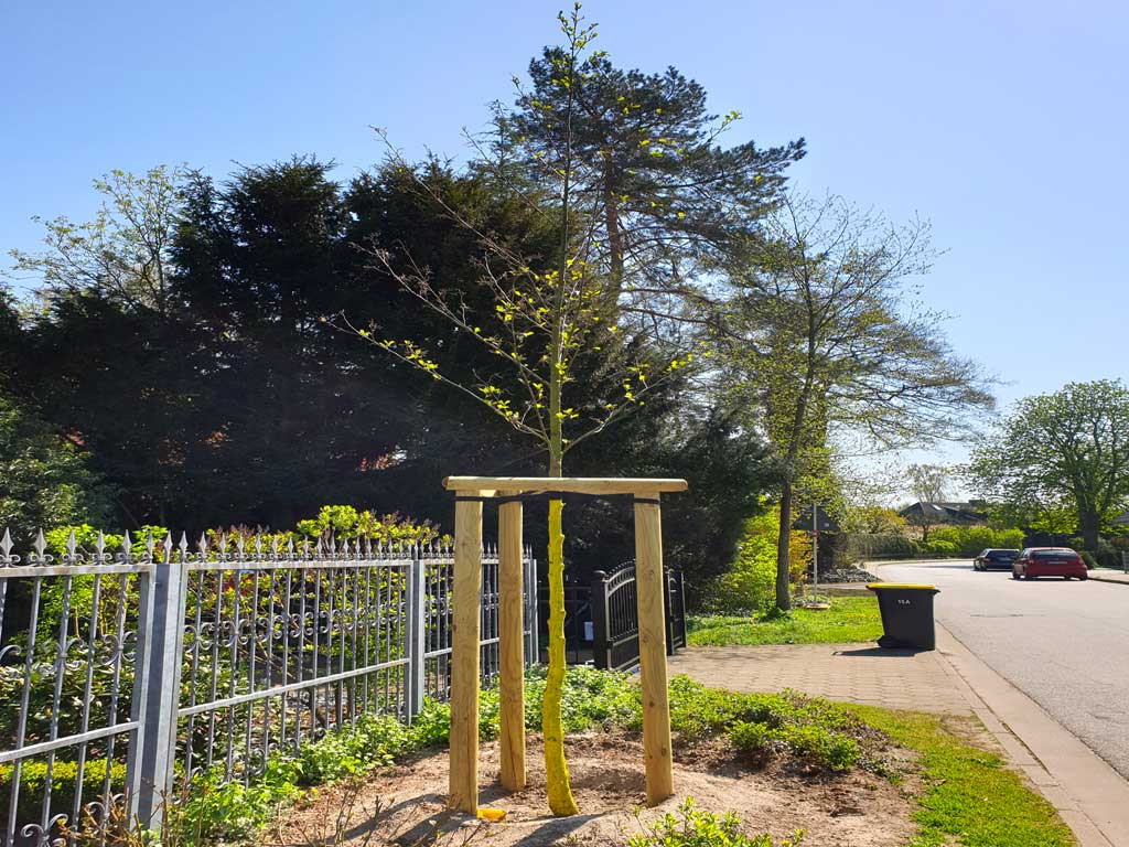 Fachgerechte Baumpflanzung mit Dreibock für einen schönen Baum im Hamburger Osten