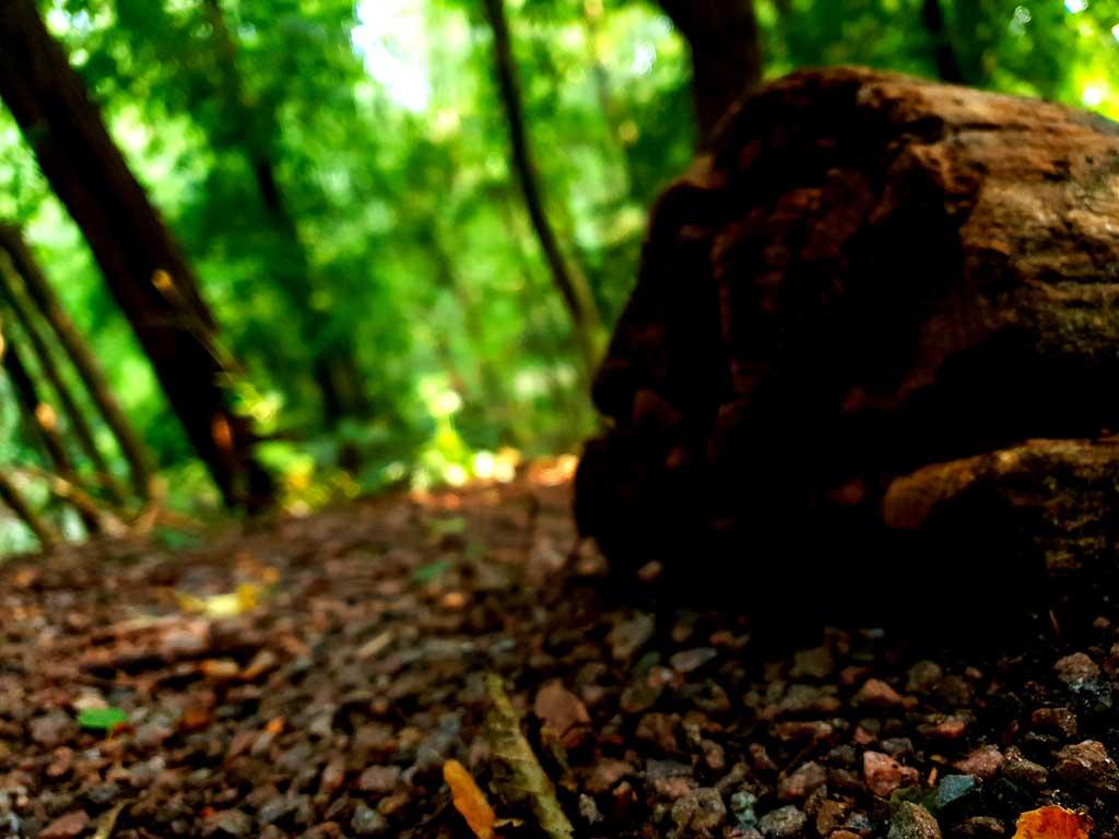 Waldboden im Tageslicht